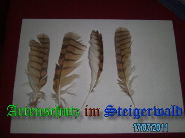 Bild zum Eintrag (22917-160)