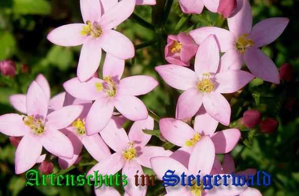 Bild zum Eintrag (39066-160)