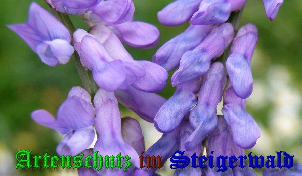 Bild zum Eintrag (39696-160)