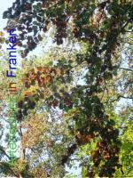 Bild zum Eintrag (1030389-177)