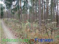 Bild zum Eintrag (1038472-177)