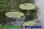 Bild zum Eintrag (905299-177)