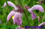 Bild zum Eintrag (905311-177)