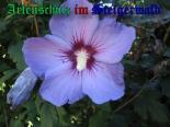 Bild zum Eintrag (905407-177)