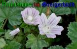 Bild zum Eintrag (905468-177)