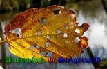Bild zum Eintrag (905509-177)