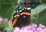 Bild zum Eintrag (905902-177)