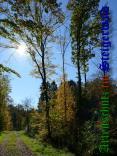 Bild zum Eintrag (905941-177)