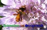 Bild zum Eintrag (906697-177)