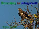 Bild zum Eintrag (906711-177)