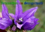 Bild zum Eintrag (908477-177)