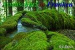 Bild zum Eintrag (912149-177)