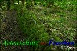 Bild zum Eintrag (912155-177)