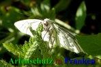 Bild zum Eintrag (912243-177)
