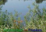 Bild zum Eintrag (912380-177)