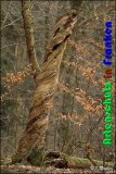 Bild zum Eintrag (913945-177)
