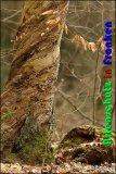 Bild zum Eintrag (913947-177)