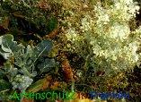 Bild zum Eintrag (915897-177)