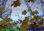 Bild zum Eintrag (915912-177)