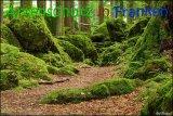 Bild zum Eintrag (916692-177)