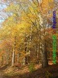 Bild zum Eintrag (916869-177)