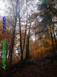 Bild zum Eintrag (917319-177)
