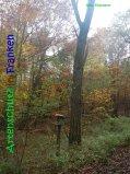 Bild zum Eintrag (917325-177)