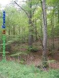 Bild zum Eintrag (919241-177)