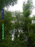 Bild zum Eintrag (919338-177)