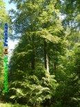 Bild zum Eintrag (919377-177)