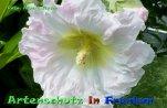 Bild zum Eintrag (920381-177)