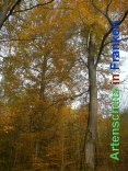 Bild zum Eintrag (920503-177)