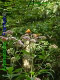 Bild zum Eintrag (920927-177)