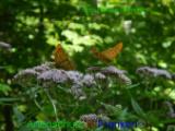 Bild zum Eintrag (920938-177)
