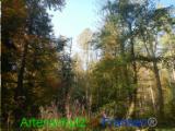 Bild zum Eintrag (921051-177)