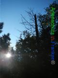 Bild zum Eintrag (921061-177)