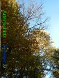 Bild zum Eintrag (921075-177)