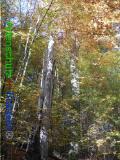 Bild zum Eintrag (921080-177)