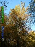 Bild zum Eintrag (921082-177)