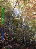 Bild zum Eintrag (921085-177)