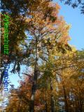 Bild zum Eintrag (921090-177)