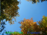 Bild zum Eintrag (921097-177)