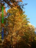 Bild zum Eintrag (921099-177)