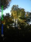Bild zum Eintrag (921105-177)