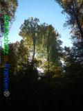 Bild zum Eintrag (921114-177)