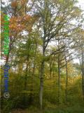 Bild zum Eintrag (921126-177)