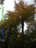 Bild zum Eintrag (921150-177)
